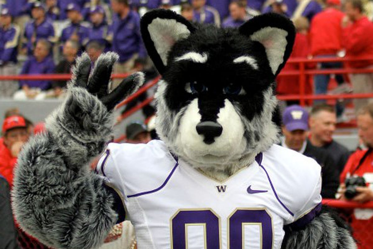 Harry and the Huskies Are Coming!