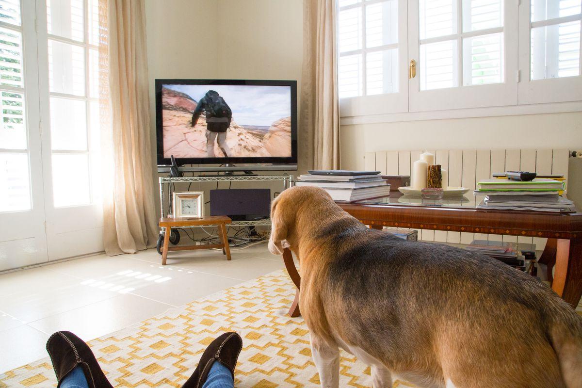 Pets Watching TV