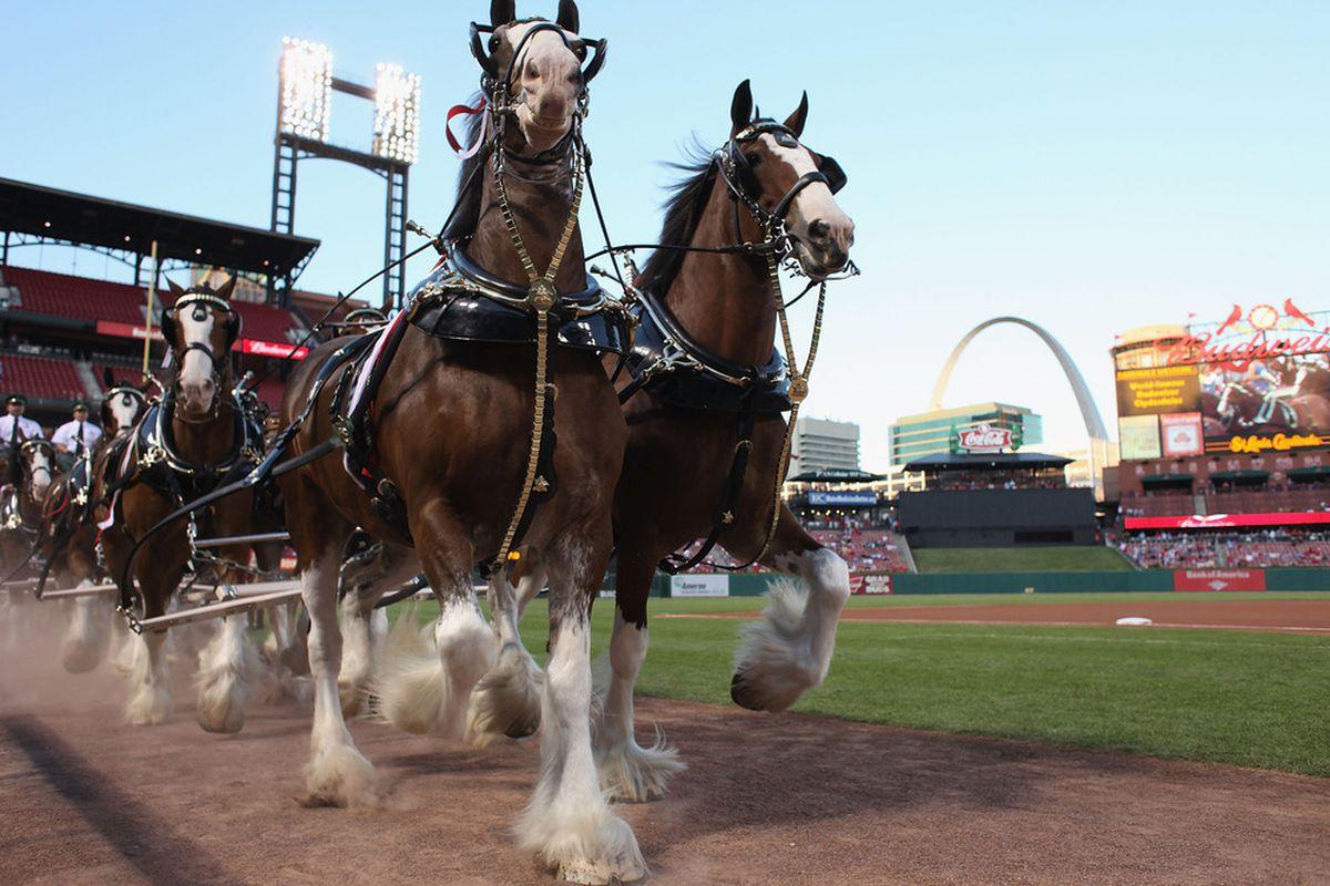 Oh hey, horses.