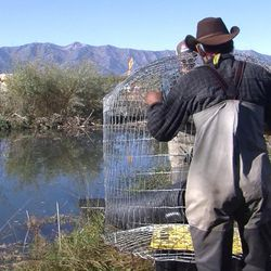 A project in Logan may be a lifesaver for beavers, and it may help Wal-Mart get along better with its furry neighbors. Workers have installed a system intended to reduce the threat of flooding caused by beaver dams.