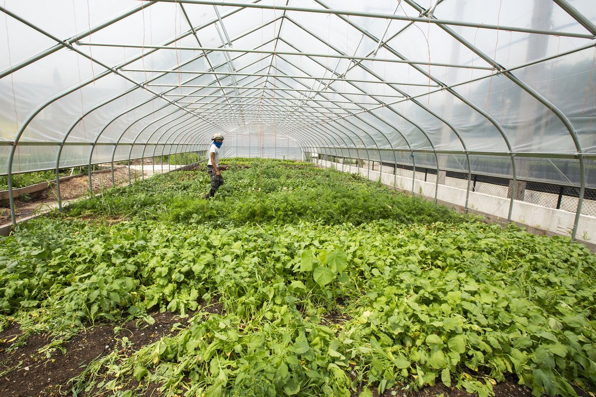 A wide shot of a green house with crops.