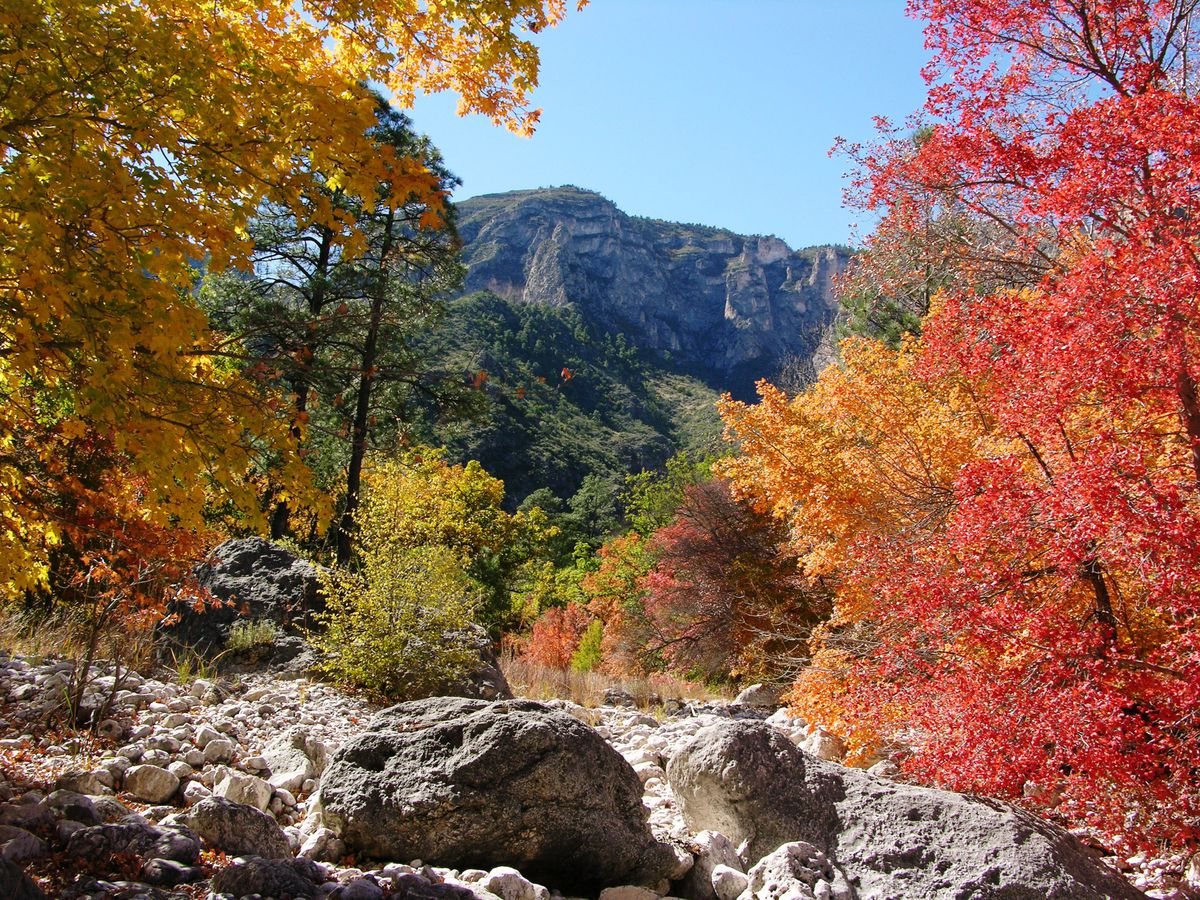 In the foreground are rocks and trees with colorful autumn leaves. In the background are mountains in McKittrick Canyon.