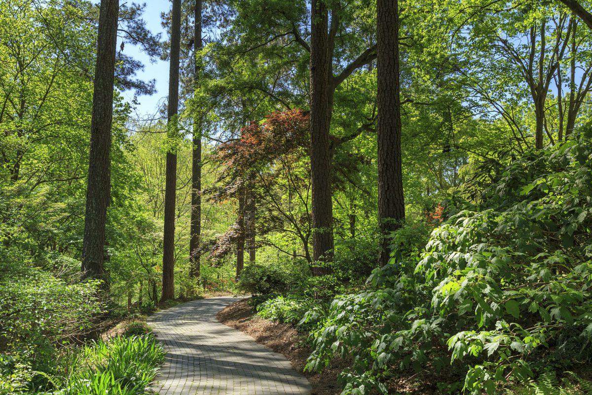Pathway in South Carolina Botanical Garden in Springtime, Clemson, South Carolina