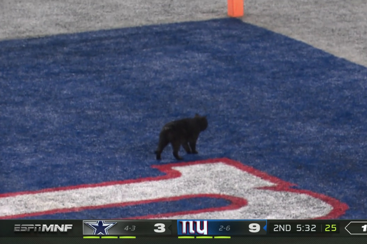 A Cat Interrupted Monday Night Football And It Was Handled