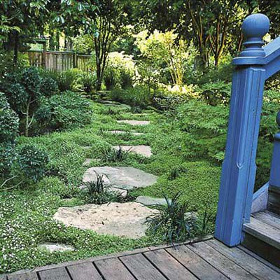 Low-Growing Groundcovers As Grass Alternative