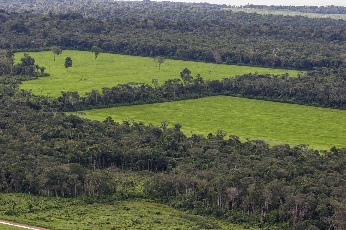 Large estate land management in Amazon rain forest,...