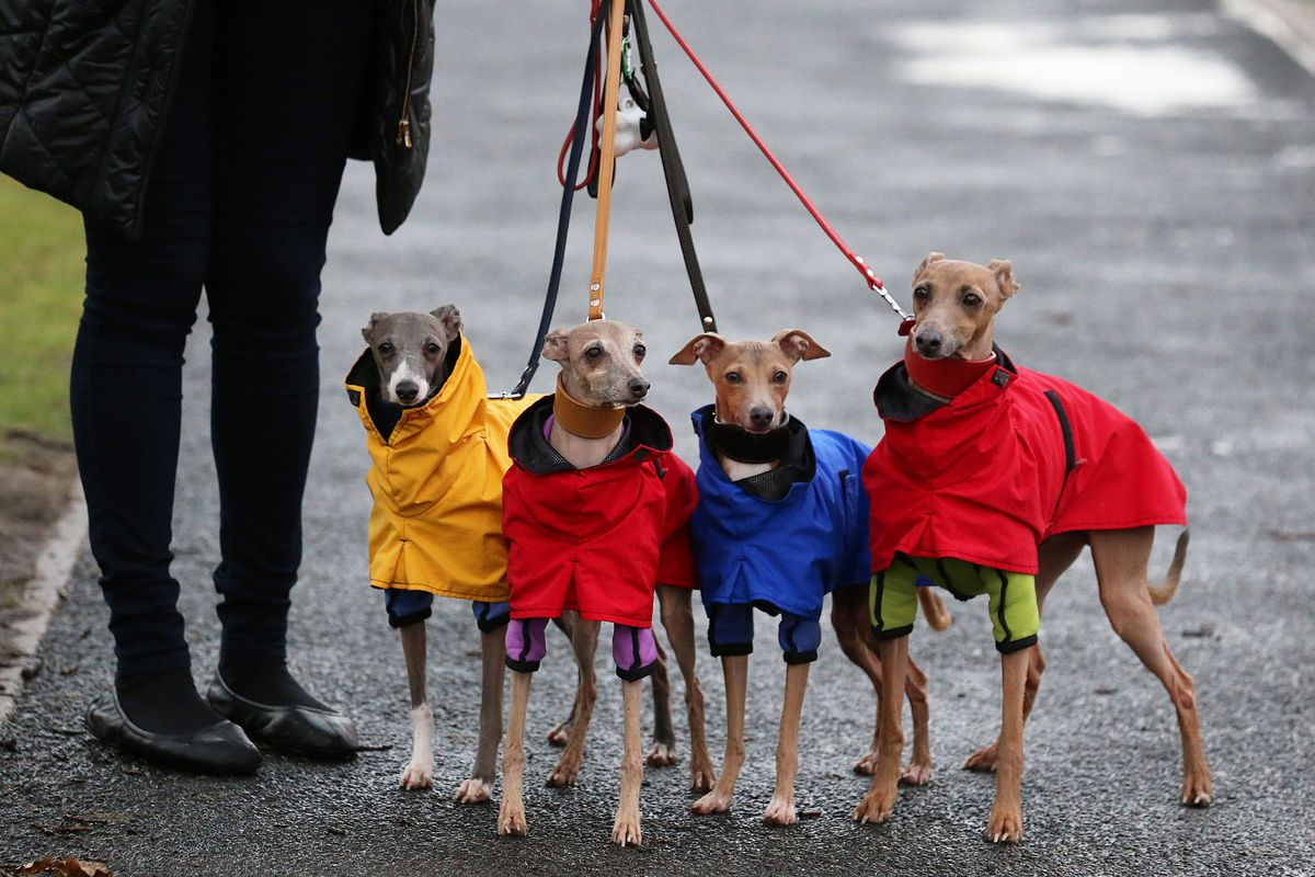 Dogs And Owners Gather For 2014 Crufts Dog Show