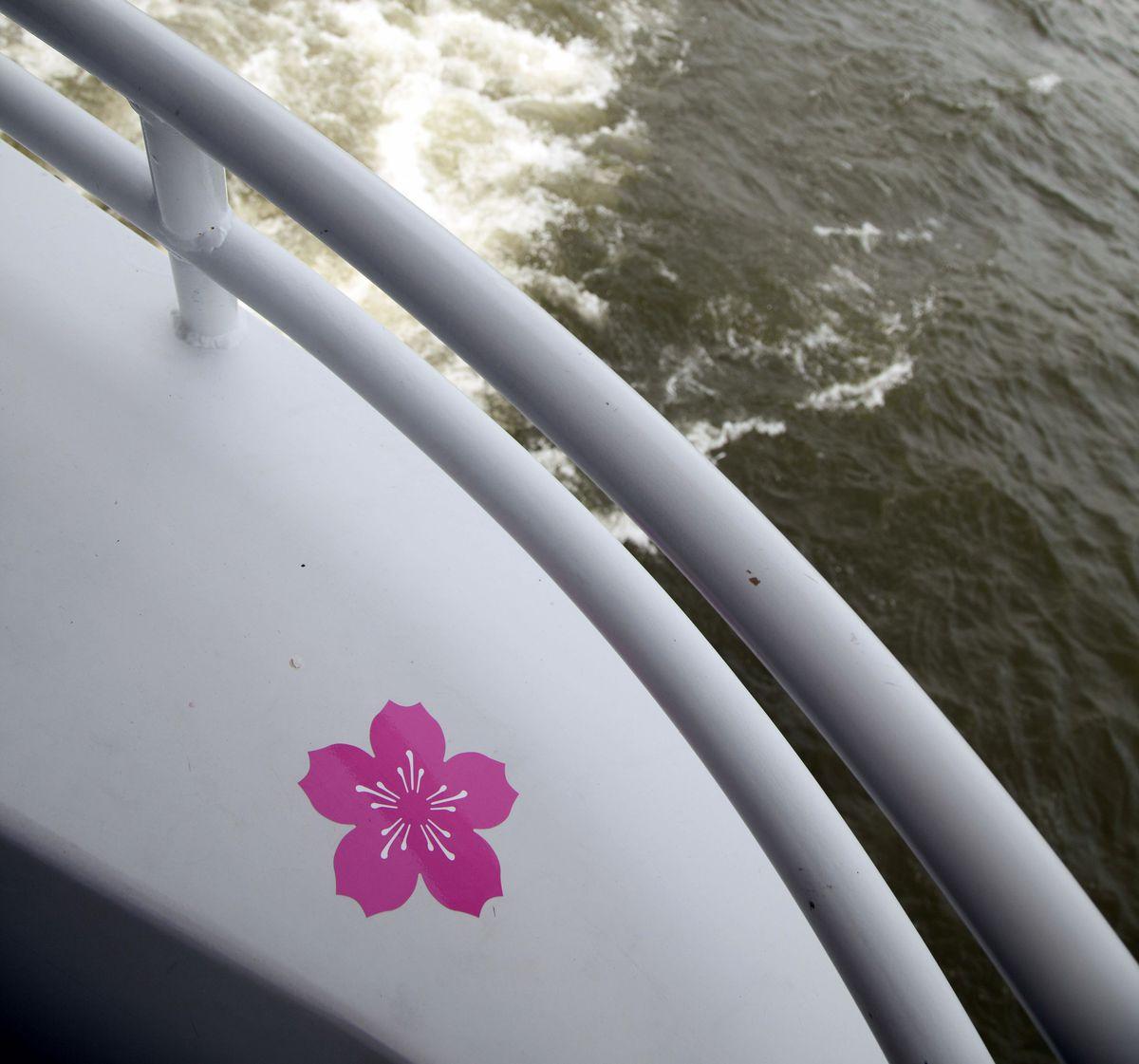 Cherry Blossom Cruise