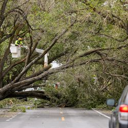 Crews clear trees blocking the street at 1700 East and Hillcrest Avenue in Salt Lake City after severe winds struck the Wasatch Front on Tuesday, Sept. 8, 2020.