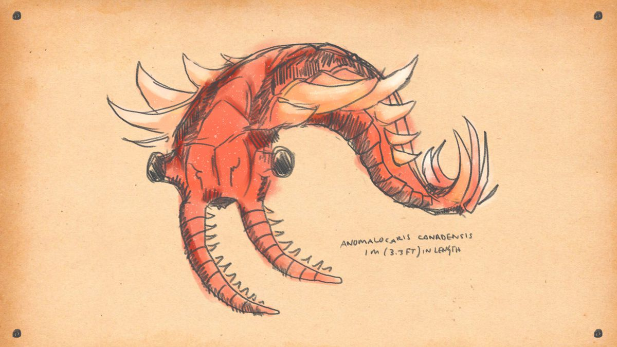 drawing of Anomalocaris, similar to a giant shrimp