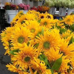 """Strolling the <a href=""""http://www.logansquarefarmersmarket.org/"""">Logan Square Farmers Market</a> [3059 West Logan Boulevard] is my favorite way to spend summer Sundays in Logan Square. Being so far from my hometown of Amsterdam, I love being a part of t"""