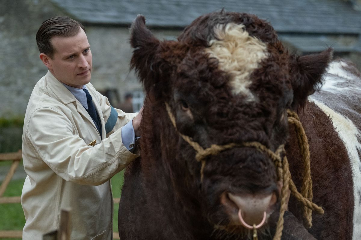 An actor playing a country vet stands beside a large woolly bull with a ring in its nose.