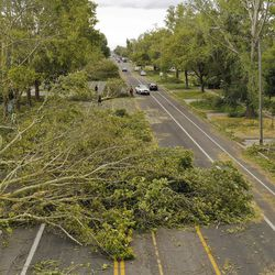 Trees lay across 900 West and 800 North in Salt Lake City after being toppled by high winds on Tuesday, Sept. 8, 2020.