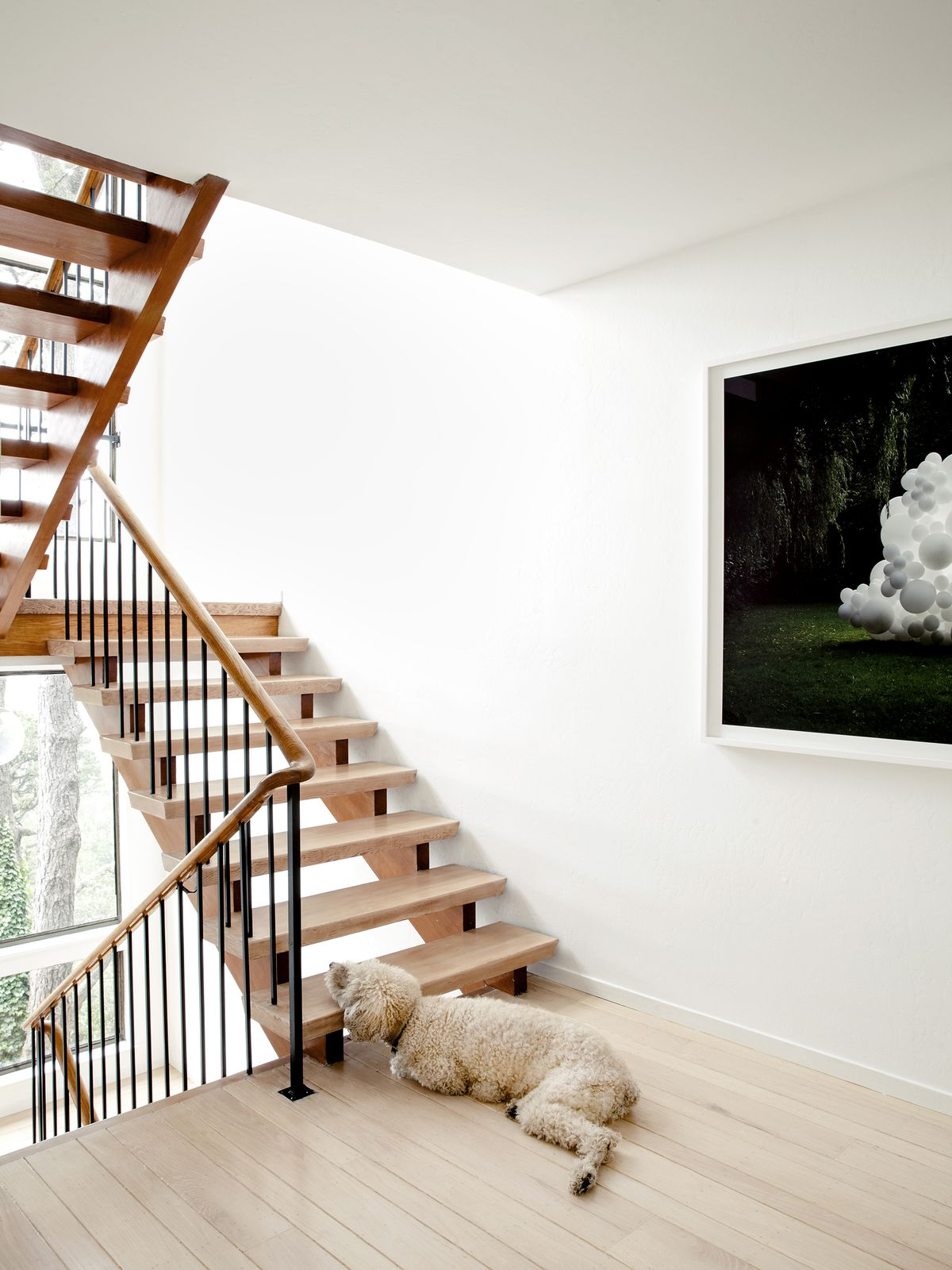 A wooden staircase in a house that has white walls. There is a large tan dog laying their head on one of the stairs.