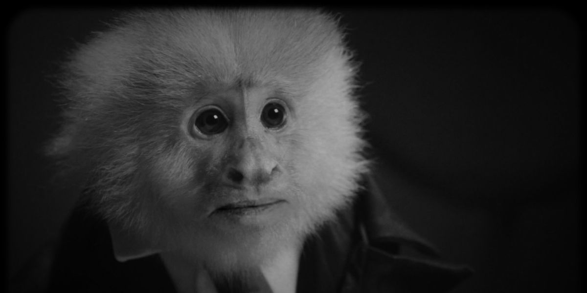 Twin Peaks creator David Lynch interrogates a monkey in Netflix short film