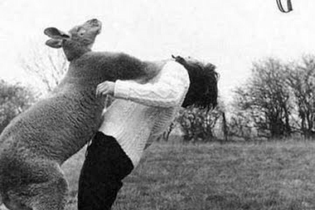 """via <a href=""""http://2.bp.blogspot.com/_VMq0yY9NCOo/Sszij8z44BI/AAAAAAAAC1M/vQCpAlqVhzo/s400/kangaroo-punch-woman.jpg"""">2.bp.blogspot.com</a>"""