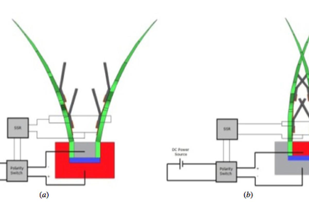 Robot venus flytrap developed as basis for artificial muscles the robot venus flytrap ccuart Choice Image