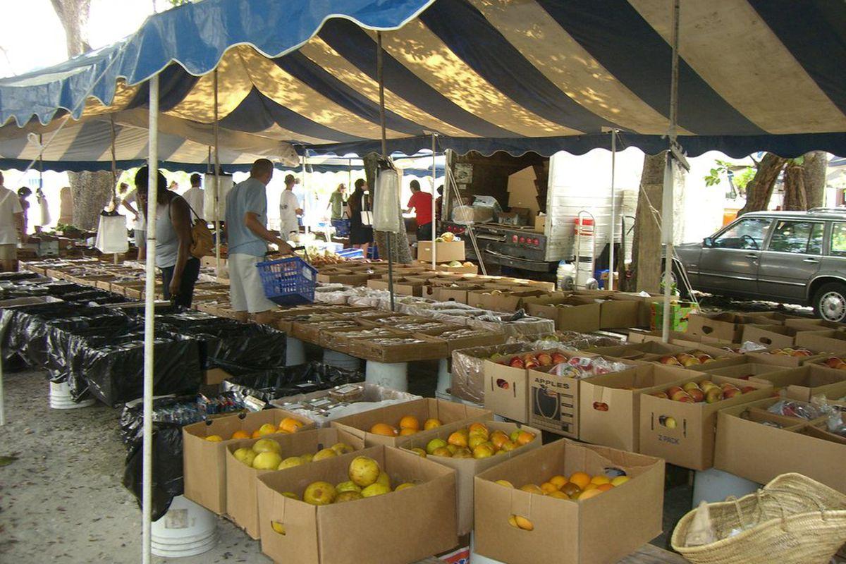 Glasser farmers' market in Coconut Grove