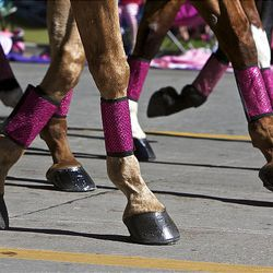 The perfectly manicured and polished hooves of the Silver Spurs Riding Club click along the street as they perform for spectators  who watch as the floats, horses and celebrities participate in the Days of '47 Parade in Salt Lake City Saturday.