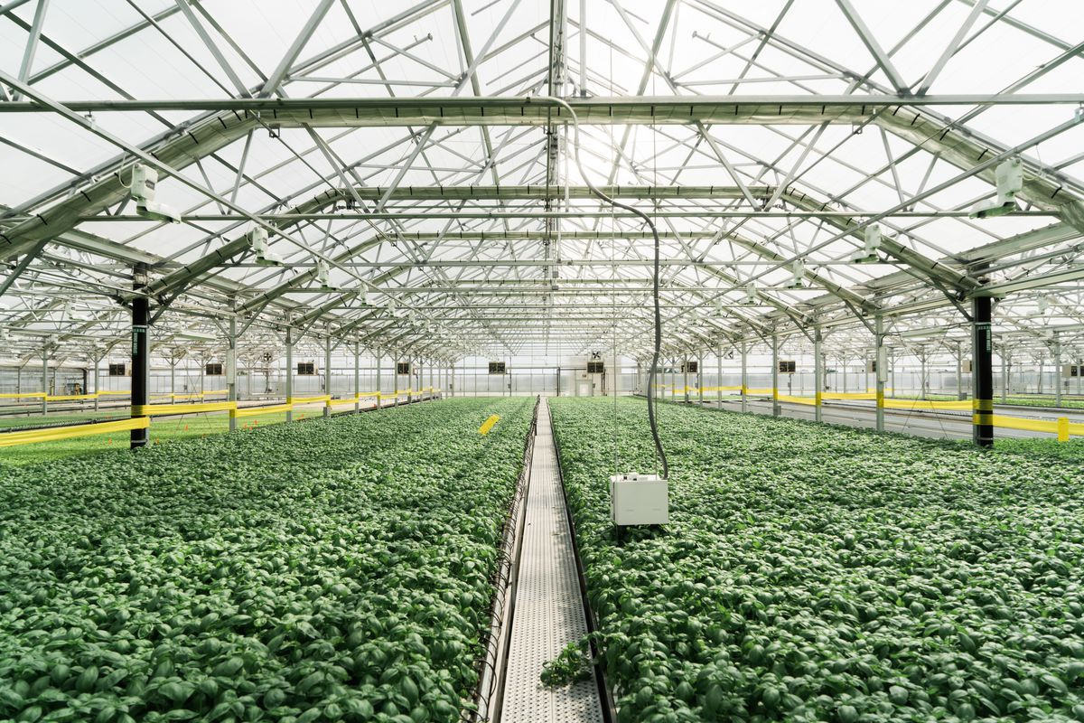 A greenhouse on a roof with glass walls and ceiling and rows of green plants.