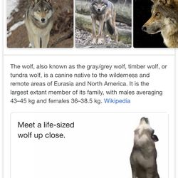 Here's how to look at life-sized animals in AR through