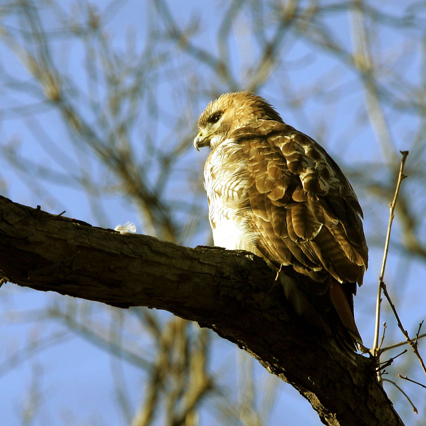 Odds Are A Hawk Won T Steal Your Pet But You Should Still Be Cautious The Verge
