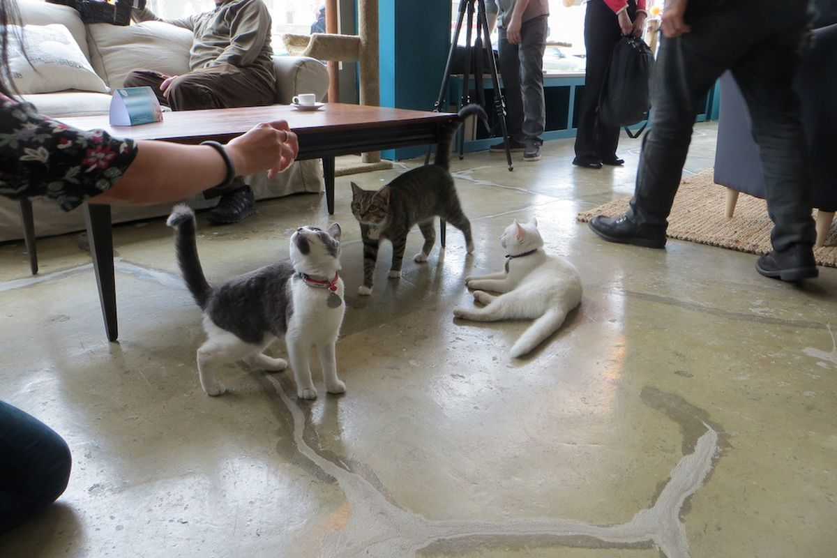 Purina One's Cat Cafe in New York