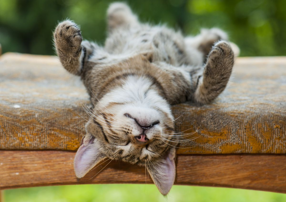A cat sleeping on its back with its paws in the air.