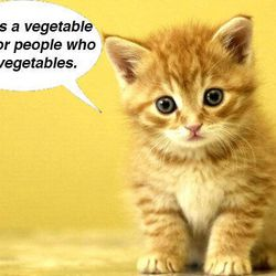 """<a href=""""http://ny.eater.com/archives/2012/08/the_worst_lines_of_the_nicoletta_reviews_with_cats.php"""">Critical Cats: The Worst Lines of the Nicoletta Reviews</a>"""