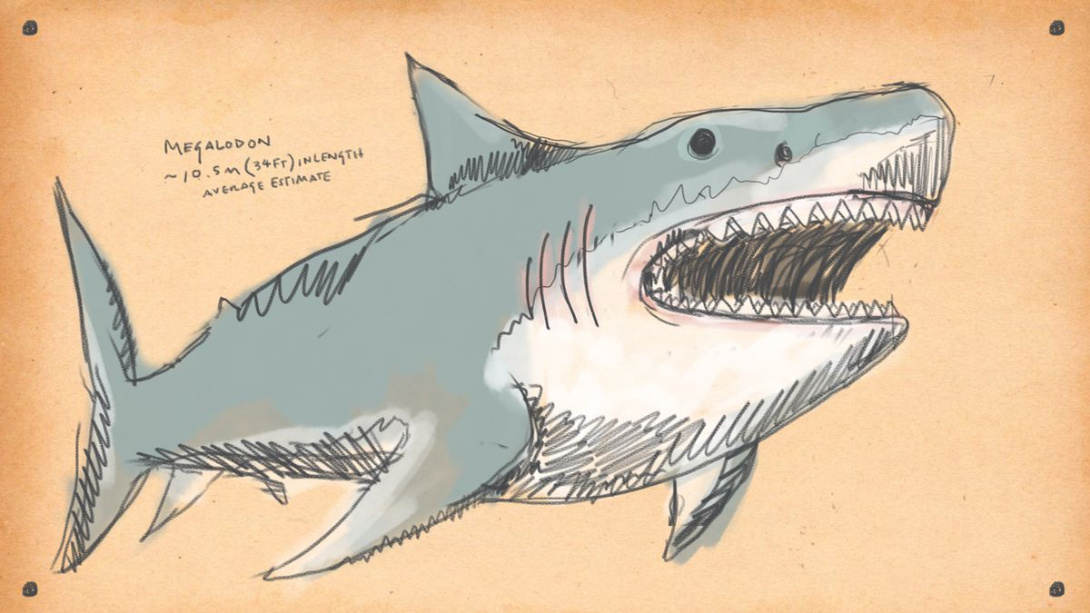 drawing of a Megalodon, essentially a gigantic shark