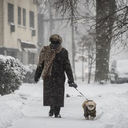 A woman walks her dog near North Ridge Boulevard and West Birchwood Avenue in Rogers Park after more than three inches of snow fell during a winter storm that moved through the Chicago area overnight, Tuesday morning, Jan. 26, 2021.