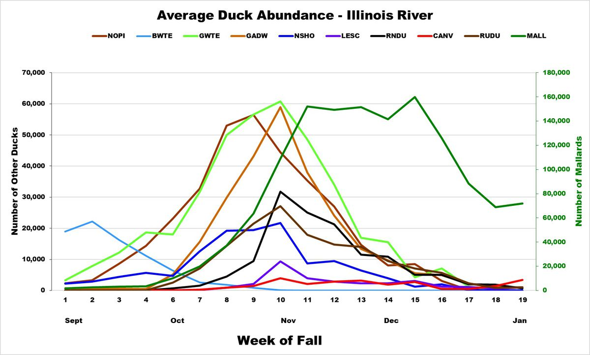 Duck abundance chart for the Illinois River Valley. Provided by Aaron Yetter/Illinois Natural History Survey