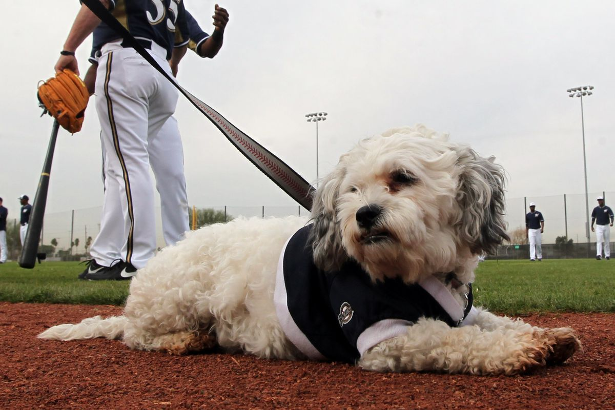 Don't let Hank's cute face fool you.  He's ready to defend the Brewers if you try to hurt them.