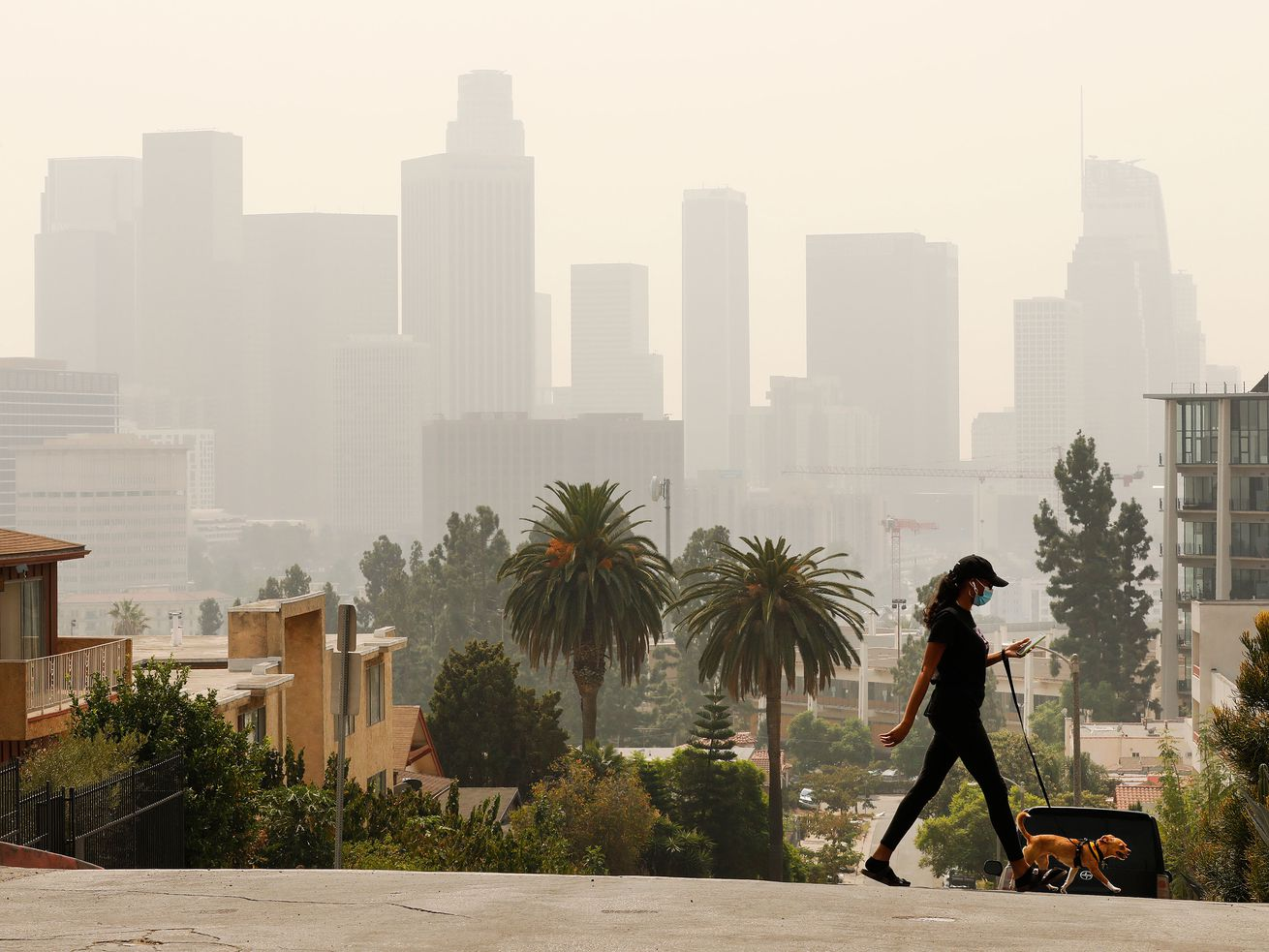 ?Cheering at a 142?: A Smoke-Shrouded West Coast Is Obsessed with Air-Quality Apps