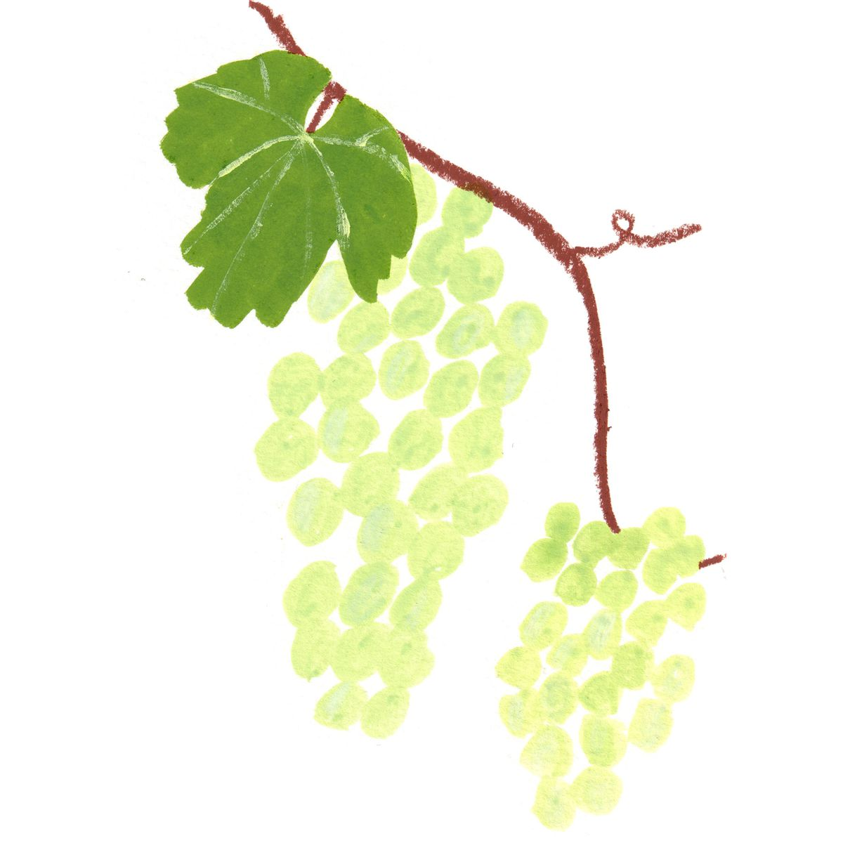 A drawing of green grapes and a green leaf on a stem.