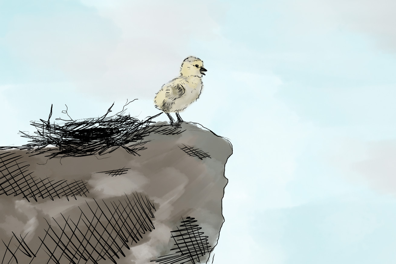 suicidegoose.0 - The barnacle goose is one of nature's most truly metal creations