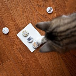 """Kitty-approved <a href=""""http://www.etsy.com/listing/121957822/cat-magnet-set?ref=v1_other_1"""">Cat Magnet Set</a>, $10 from Exit343Designs"""