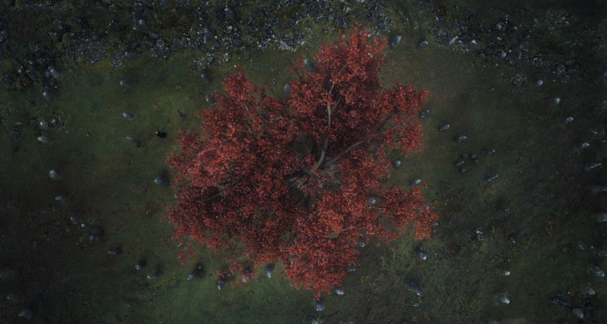 Game of Thrones season 6 episode 5 - tree with spiral pattern
