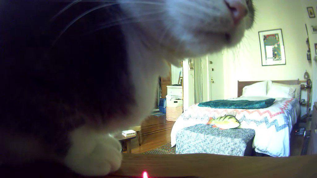 Chloe, through the eyes of the Petcube. (Alyssa Bereznak)