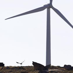 A golden eagle flies near a wind turbine on a wind farm owned by PacifiCorp near Glenrock, Wyoming, on Monday, May 6, 2013. Rocky Mountain Power is making regulatory filings in Utah, Wyoming and Idaho seeking approval to expand the amout of wind power serving customers by 2020.