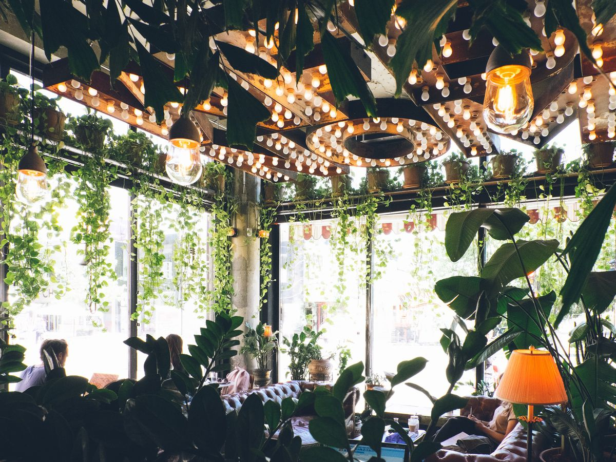 inside of cafe with a lot of greenery