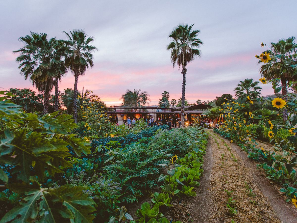 A lush farm landscape with green vegetation covering much of the ground. Flowers and palm trees abound, and the space is backdropped by a restaurant with large glass windows.