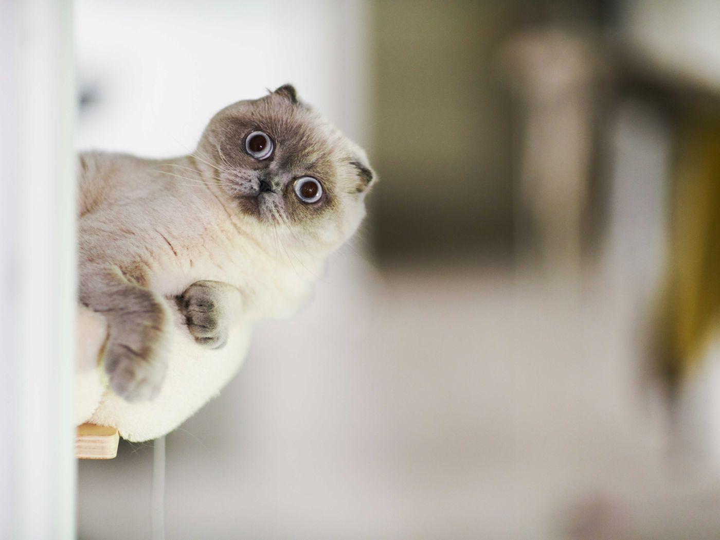 Why Coronavirus Quarantine Is Making Your Cat Or Dog Act Weird Vox