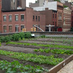 The rooftop farm