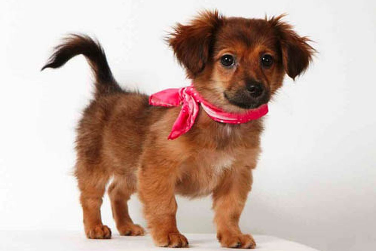 """Melody the dog via <a href=""""http://www.papermag.com/2012/01/richard_phibbs_humane_society_2.php"""">Paper</a>"""