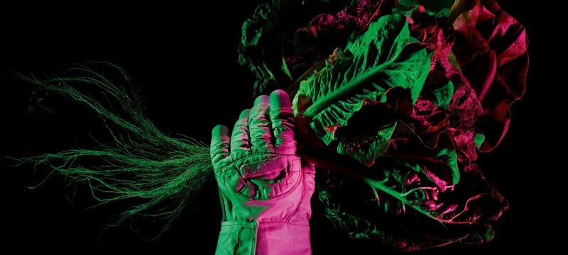 A gloved astronaut hand holds a giant bunch of leafy greens against a black background with purple lighting.