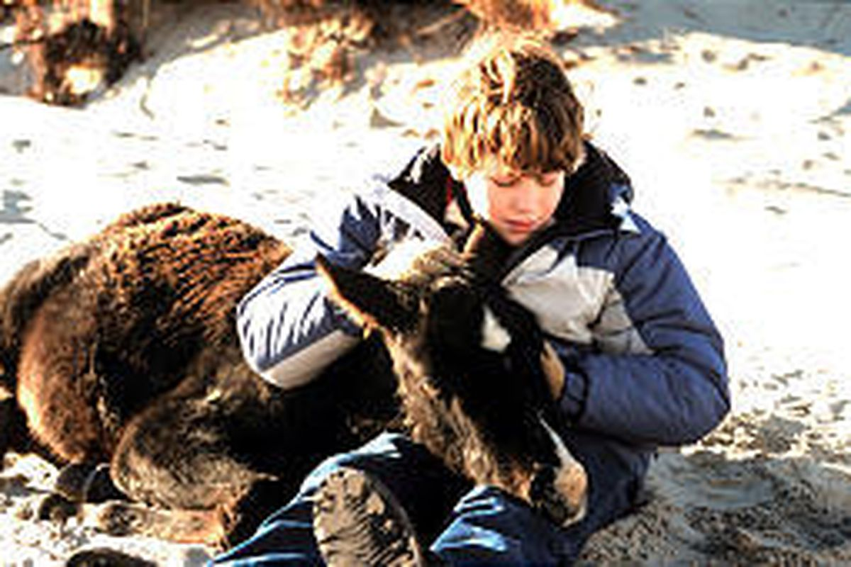 """Young actor Mark Rendall takes time to comfort a colt in the outdoor family movie, """"Touching Wild Horses."""""""