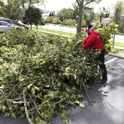 Karen Westover, a Salt Lake City School District bus driver, cleans up debris from trees at East High School in Salt Lake City on Wednesday, Sept. 9, 2020. A windstorm that ripped through the Wasatch Front on Tuesday toppled trees and damaged homes.