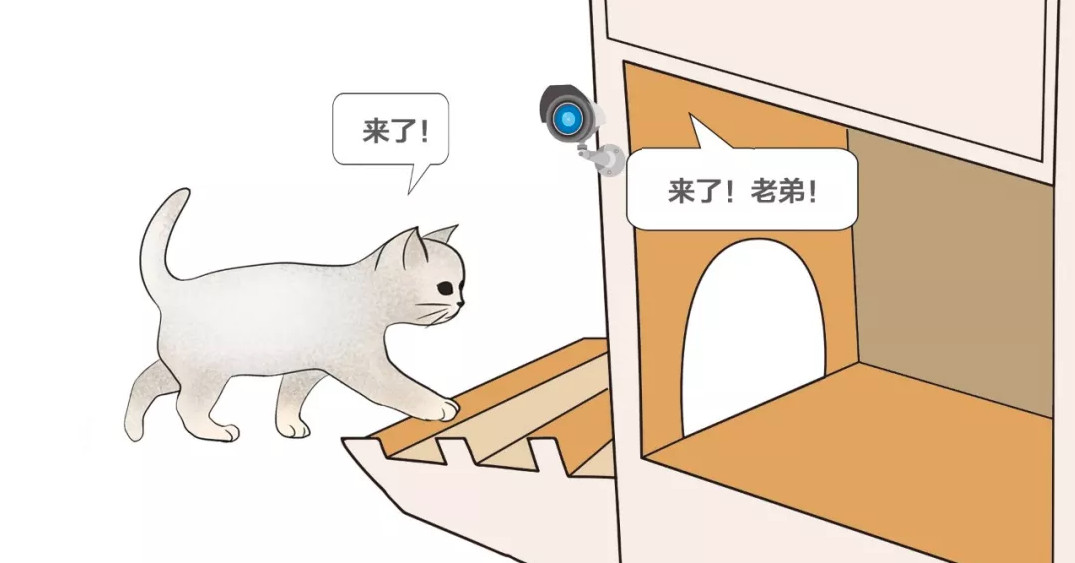 photo of Baidu made a smart cat shelter that uses AI to tell cats and dogs apart image