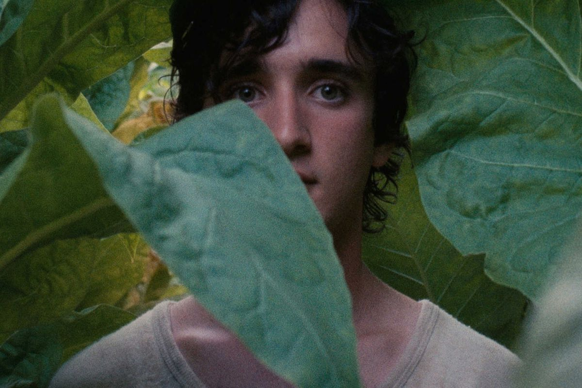 Happy as Lazzaro review: the award-winning, shocking fairy tale is